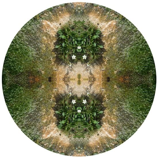 Mandala Natura